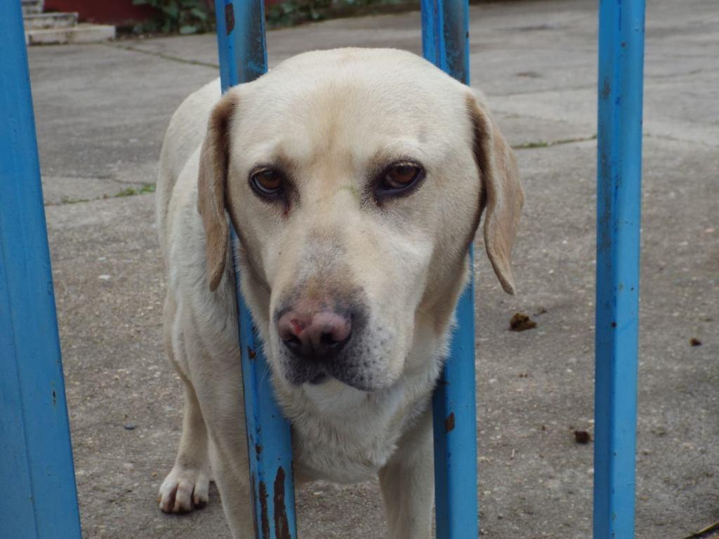 dog in industrial area of Salamanca in Spain