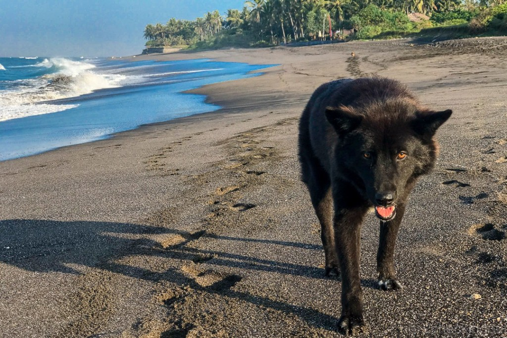 dog rescued in Bali now on beach