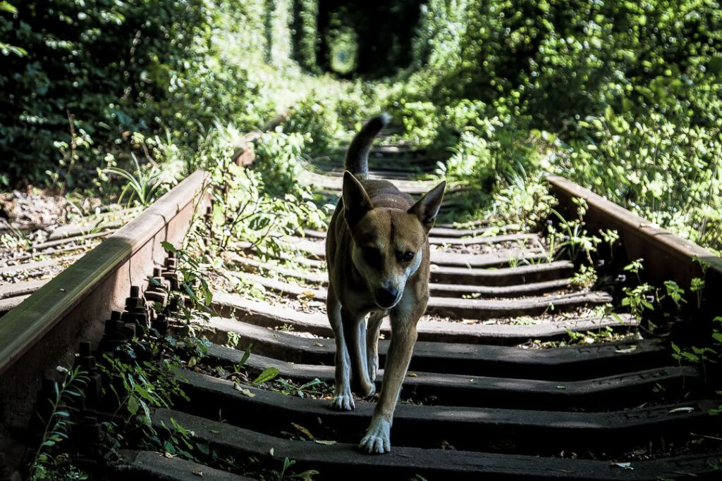 dog at Ukraine's Tunnel of Love
