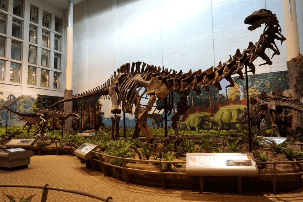 The Dinosaurs in Their Time exhibit is a visitor favorite