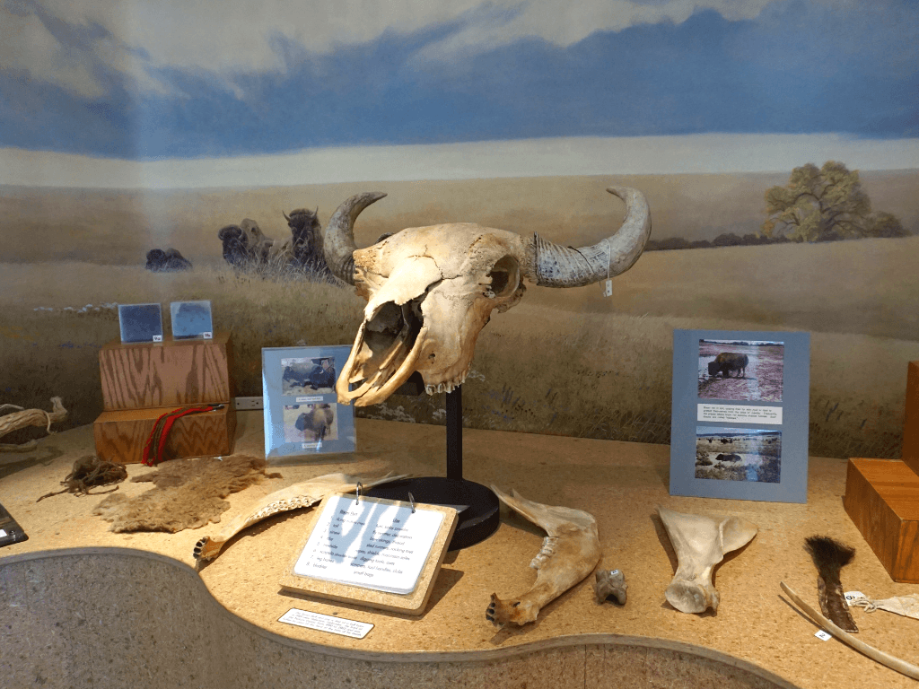 Learning about the natural history of Nebraska and the central great plains