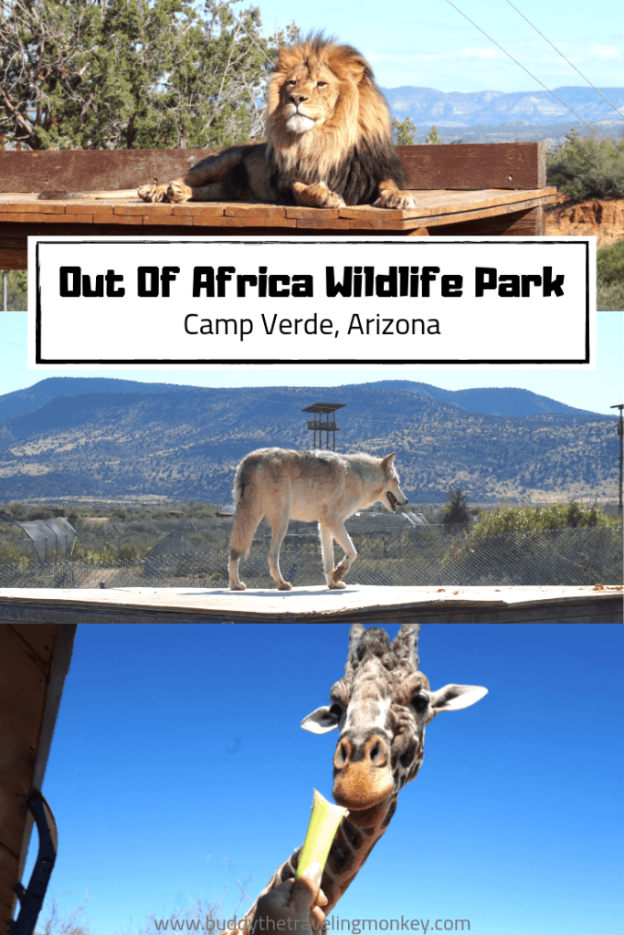 This Arizona wildlife park is amazing! Located in Camp Verde, Out of Africa offers visitors a chance to learn and get up close to wildlife from all over the world.