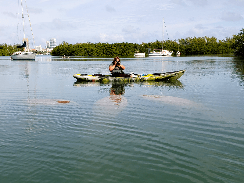 Kayaking with manatees in Miami