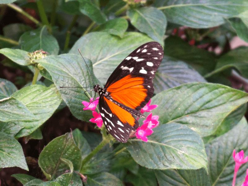 Enjoying butterflies at Hershey Gardens, one of the fun things to do near Hershey PA