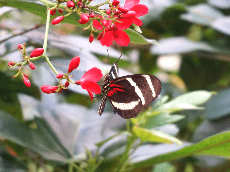 There are hundreds of butterflies in Hershey Gardens, one of the things to do around Hershey PA