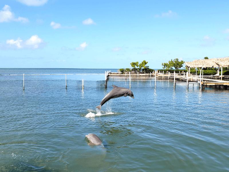 Dolphin Research Center in Marathon