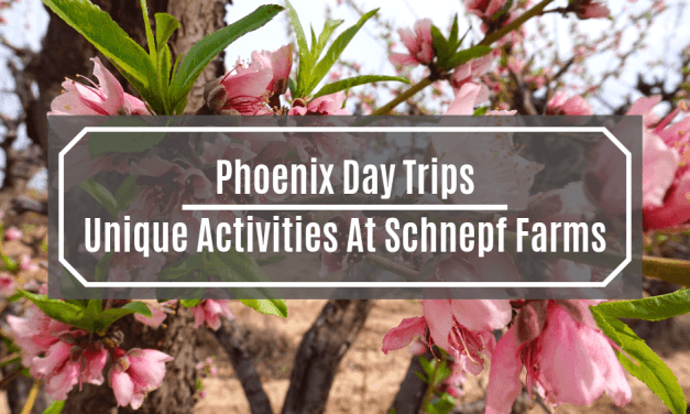 Phoenix Day Trips: Unique Activities At Schnepf Farms