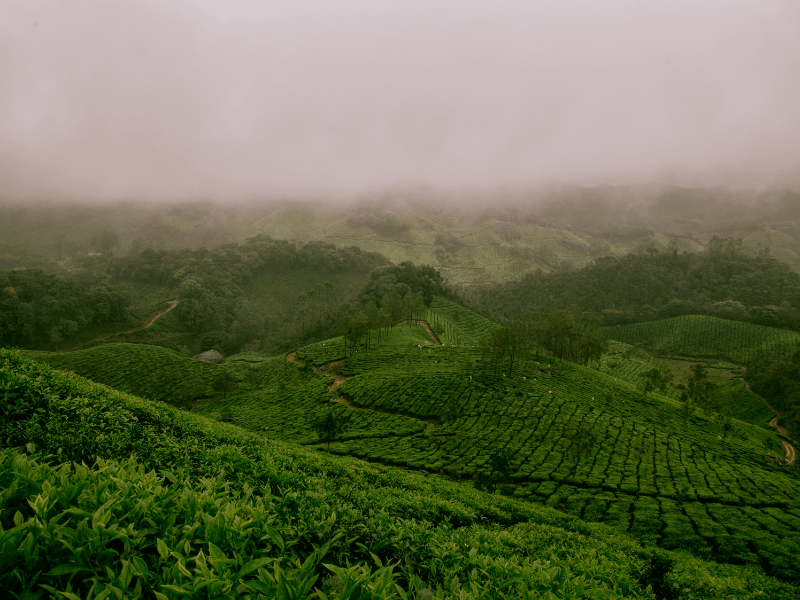 Mist covered rainforests in Kerala