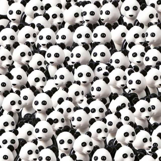 ursi panda 1