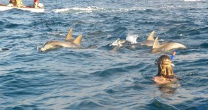One day Dolphin Tours in Zanzibar