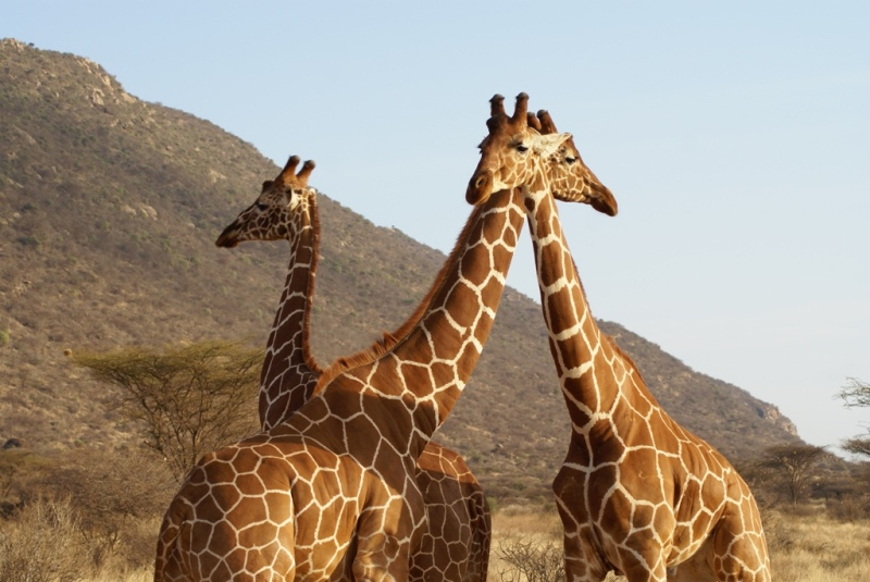 Serengeti Camping Safari 7 Days