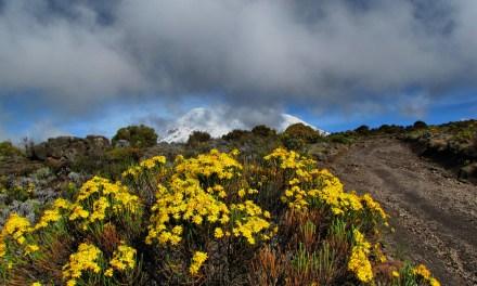 Kilimanjaro Climbing Marangu Route 5 Days