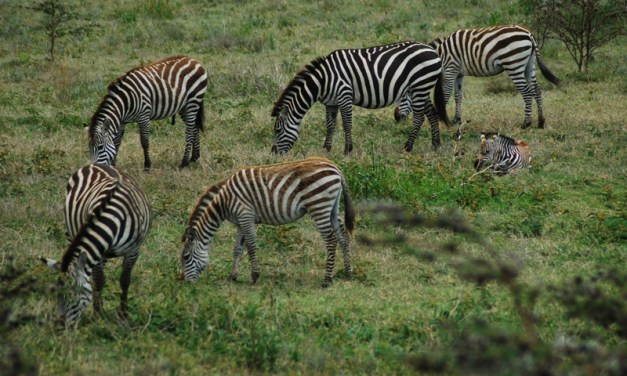 Northern Tanzania Camping Safari  6 Day