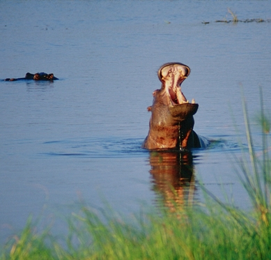 9 Day Safari to Mahale and Gombe Stream