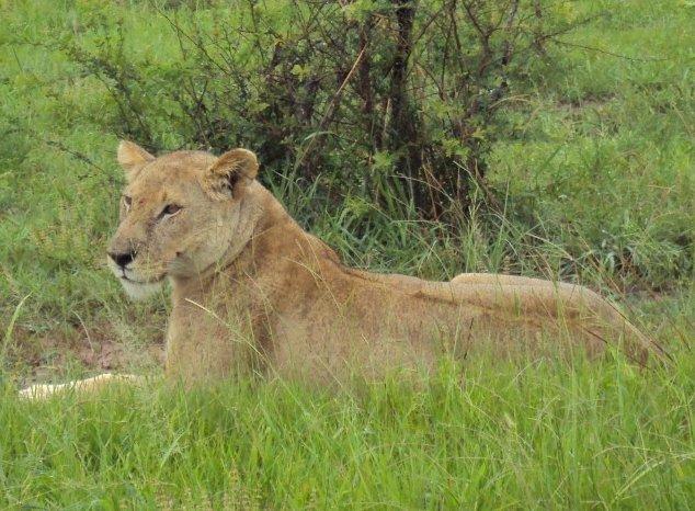 5 Day Safari to Mikumi and Uduzungwa