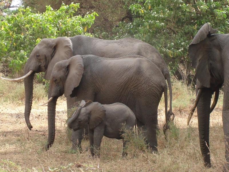 Northern Tanzania 6 Day Safari