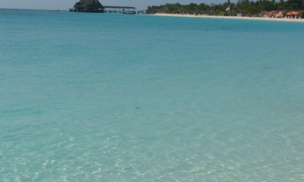 3 Day Safari and Dolphin Tour in Zanzibar