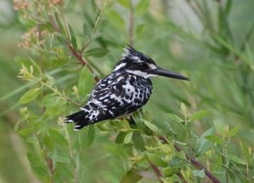 Birds in Selous