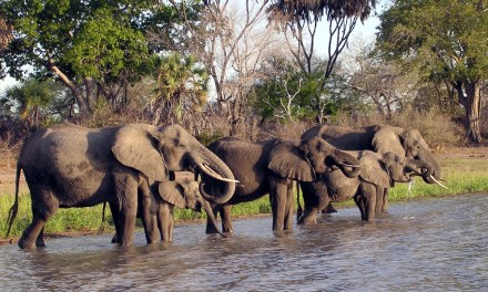 8 Day 7 Nights Safari  Selous, and Udzungwa