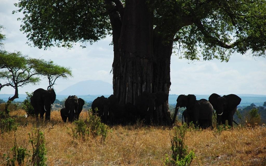 9 Day Safari Tarangire Manyara Serengeti Ngorongoro