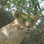 One Day Safari to Manyara National Park