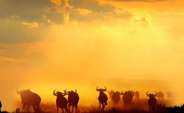 Wildebeest Migration Safari, 10 Days