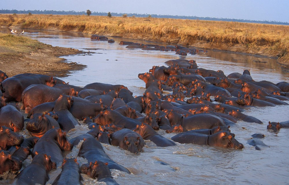 7 Day Safari to Katavi and Mahale