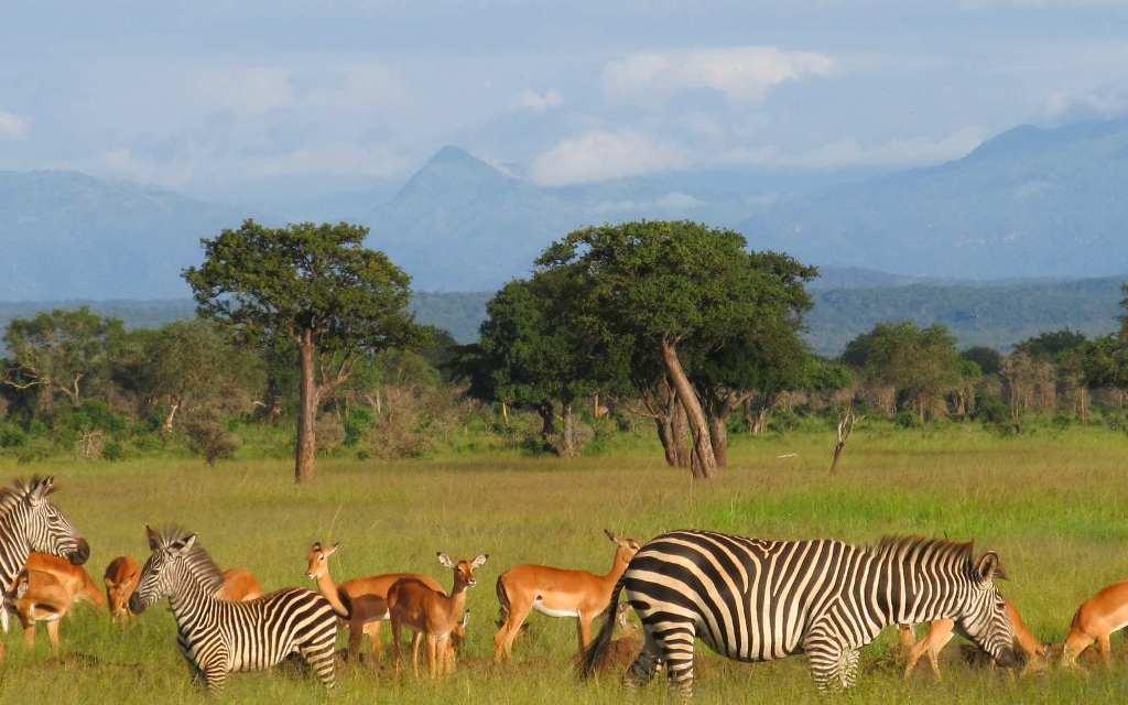 3 Day Safari to Mikumi National Park