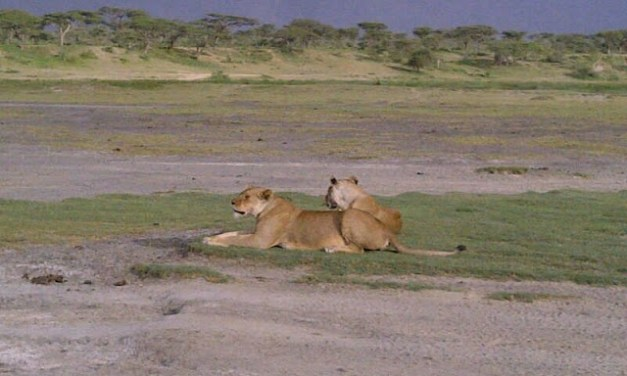 A 4 Day Tour to Northern Tanzania, Serengeti and Ngorongoro