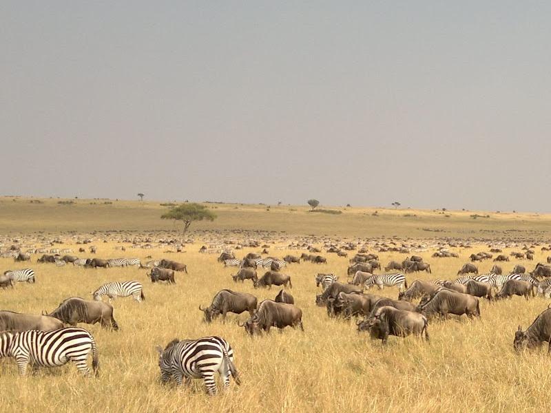 7 Day Lodge Safari to Serengeti Ngorongoro