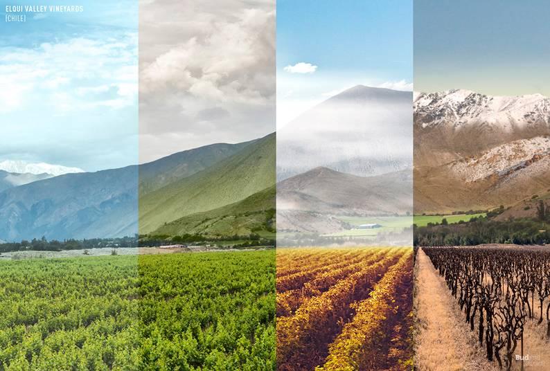 Elqui Valley Vineyards (Chile)