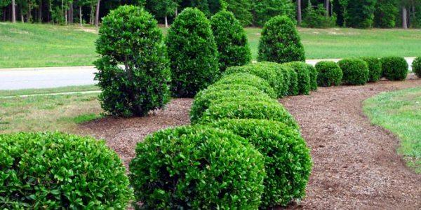 7 inexpensive backyard privacy