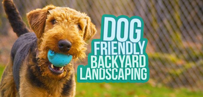 dog friendly backyard landscaping ideas budget dumpster