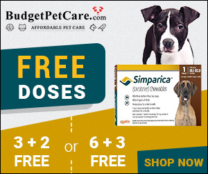 Best Price Guaranteed: Buy Cheapest Simparica Online + 15% Extra Discount & Free Shipping! Also Avail Free Monthly Chews, Shop Today! Use Code: BSIMPC15