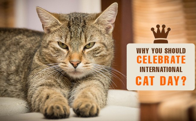 Why You Should Celebrate International Cat Day