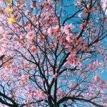 Tuin opknappen: bespaartips