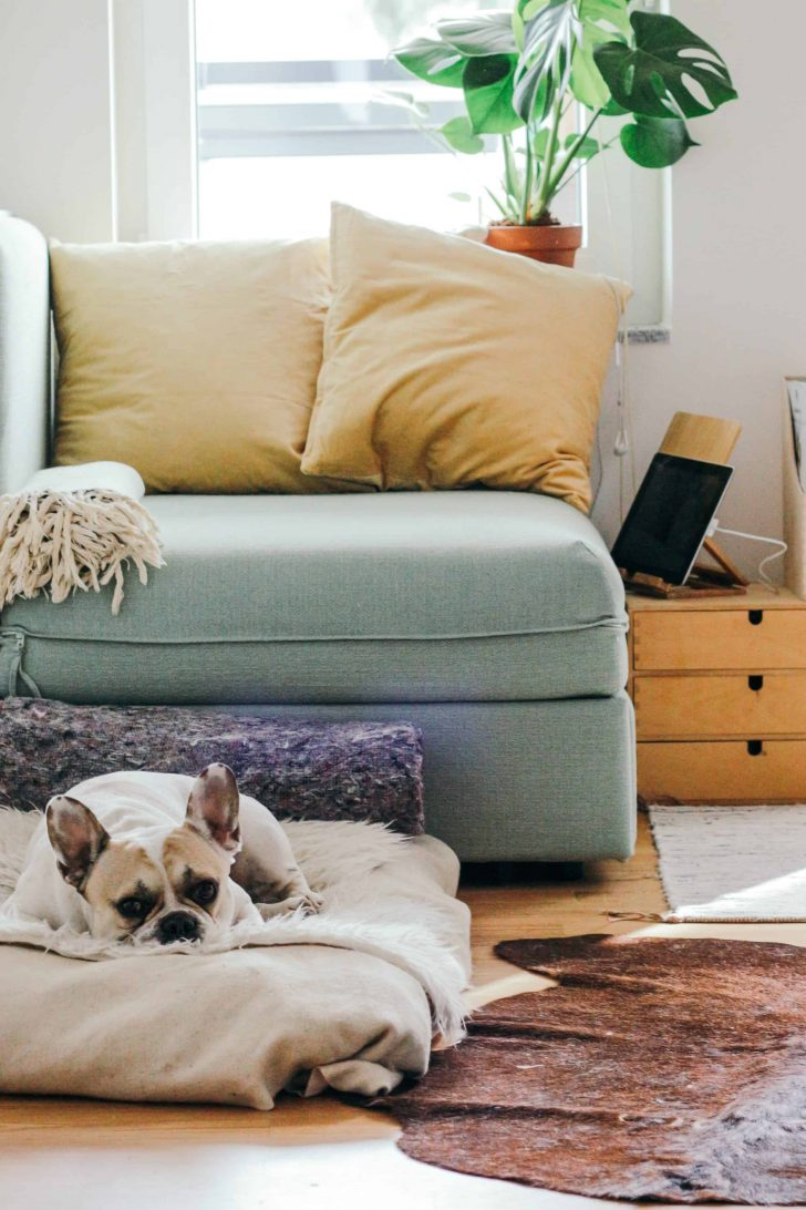 dog sitting on dog bed in front of a chair