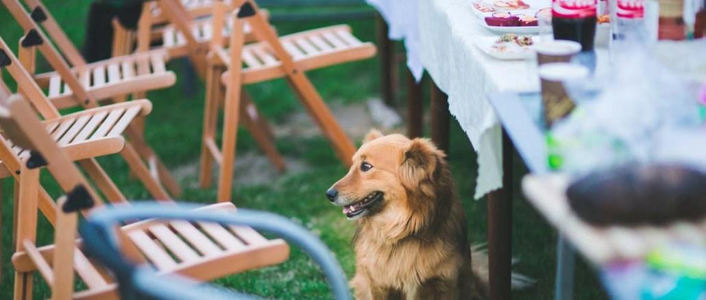 Czy warto kupić ławkę ogrodową
