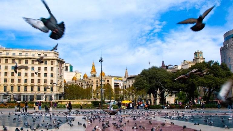 pombos barcelona
