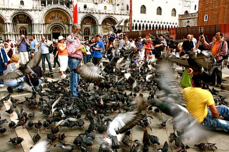 Resultado de imagem para veneza comida pombos