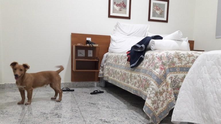 hotel-cachorro-uberaba-aceita