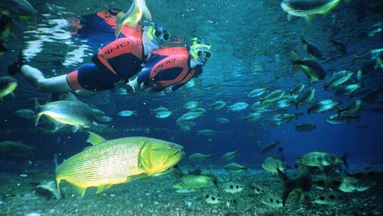 mergulho bonito mato grosso