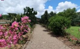 cantina strapazzon vinicola bento goncalves jardim