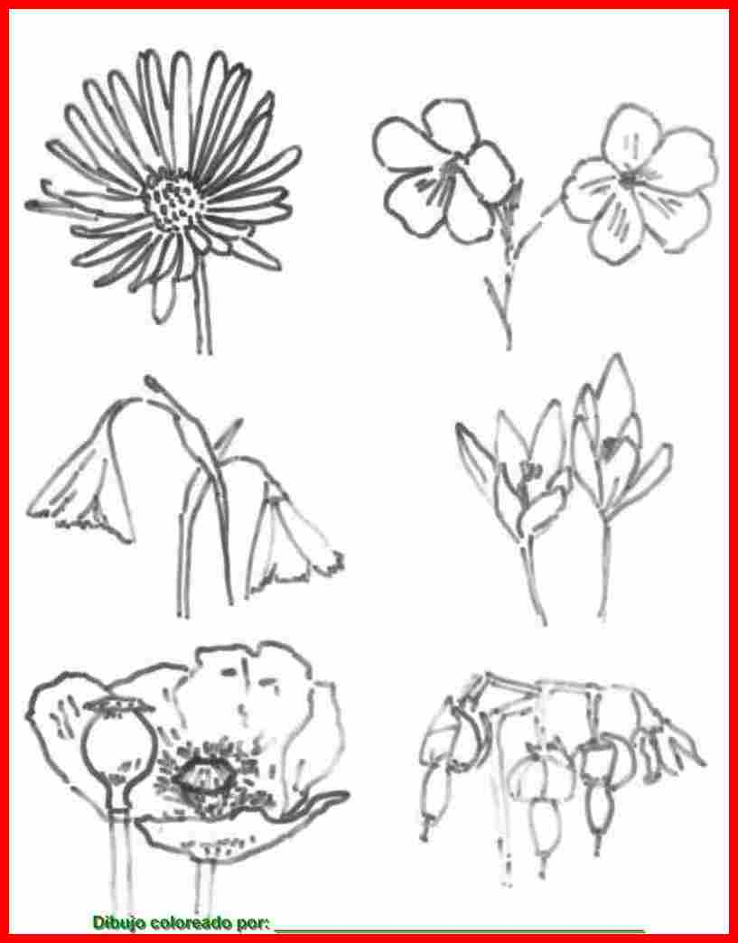 Dibujos De Flores Para Colorear Pintar E Imprimir Flores