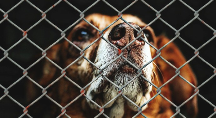 ICA Málaga quiere aumentar las penas por maltrato animal modificando el Código Penal