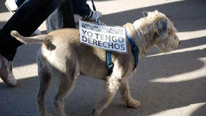 El ICAJAÉNcelebra la jornada de formación sobre el Derecho animal