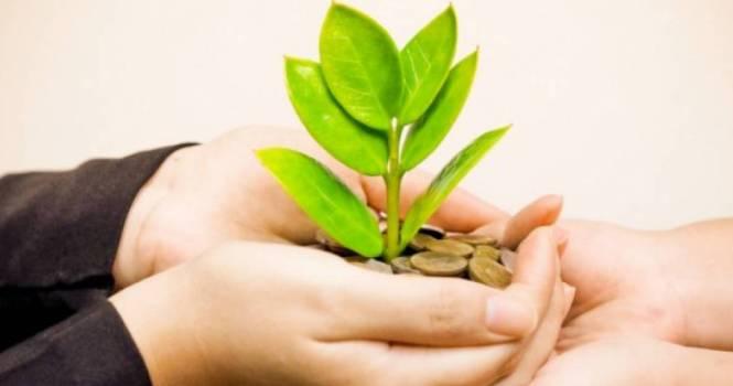 Organizaciones ambientales no pagarán costas de juicios