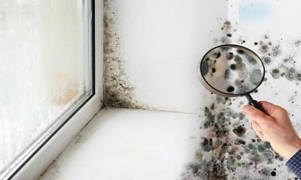 ¿Puedo cancelar mi contrato de alquiler si la casa huele a humedad?