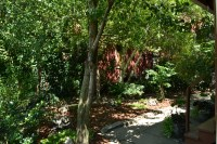 Serenity of a forest found in City of Buffalo backyard ...