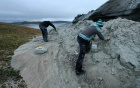 Two researchers picking fossils out of a large rock-like entity